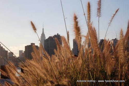 new-york-herbes